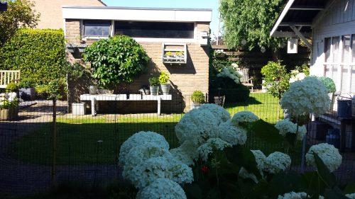 Landelijke tuin hortensia's