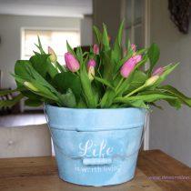 Tulpen in een emmertje