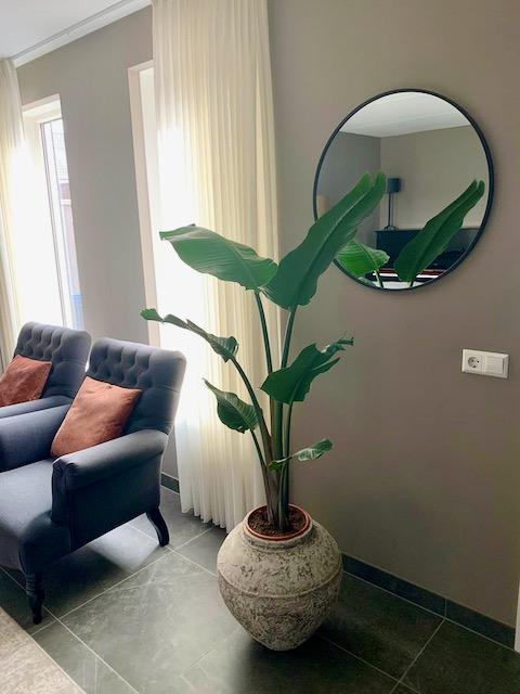 Grote kamerplant in kruik landelijke woonkamer