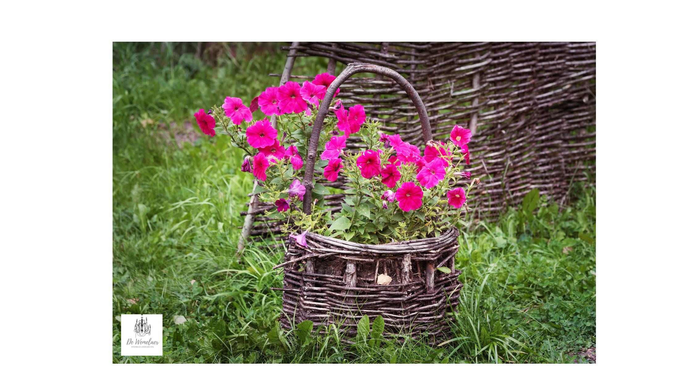 Roze petunia's in oude rieten mand
